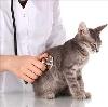Ветеринарные клиники в Улан-Удэ